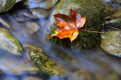 Jesień liść na kamiennym pobliskim strumyku Fotografia Royalty Free