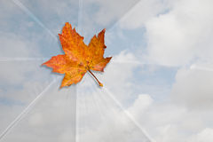 jesień liść nieba parasolowy biel Zdjęcie Royalty Free