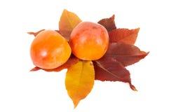 jesień liść persimmons dwa Zdjęcia Stock