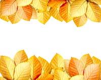 Jesień liść rama Fotografia Stock