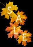 jesień liść sprzedaż Fotografia Royalty Free