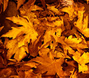 Jesień liść tło Obrazy Royalty Free