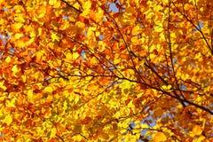 Jesień liść tło Fotografia Stock