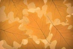 Jesień liść tło Zdjęcia Stock