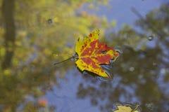Jesień liść unosi się w wodzie zdjęcia royalty free