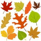 jesień liść wektor ilustracji
