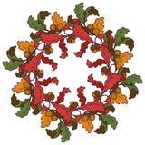 jesień liść wianek Jaskrawy barwiący Zdjęcia Stock