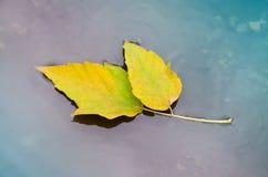 jesień liść woda Fotografia Stock