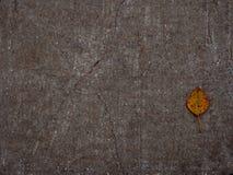 Jesień liść z drzewem na asfalcie obraz stock