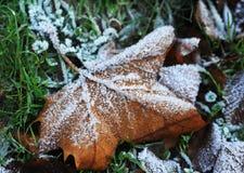 Jesień liść z hoarfrost Zdjęcie Stock