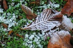 Jesień liść z hoarfrost Fotografia Stock