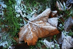 Jesień liść z hoarfrost Obraz Stock
