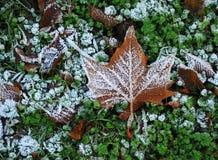 Jesień liść z hoarfrost Zdjęcie Royalty Free