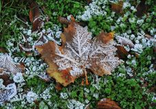 Jesień liść z hoarfrost Zdjęcia Stock