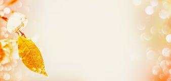 Jesień liść z raindrops i bokeh na lekkim tle, miejsce dla teksta obraz royalty free