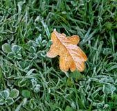 Jesień liść zakrywający z mrozem. Obrazy Royalty Free