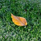 Jesień liść zakrywający z mrozem. Obrazy Stock