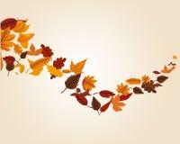 Jesień liść zawijas Obraz Royalty Free