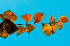 Jesień liści Akcyjny wizerunek Zdjęcie Stock