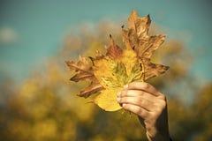 jesień liści bukiet w męskiej ręce obrazy stock