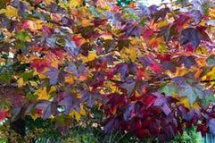 Jesień liści colourful tło Obraz Stock