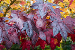 Jesień liści colourful tło Zdjęcie Stock