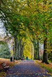 Jesień liści Dolinni ogródy Harrogate Obrazy Royalty Free