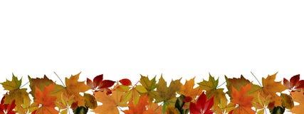 Jesień liści granica Zdjęcie Royalty Free