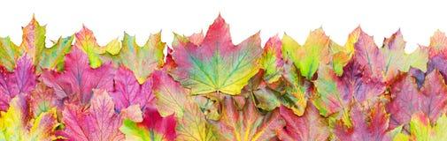 Jesień liści granica Obraz Royalty Free