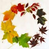 Jesień liści kolorowa rama Obraz Stock