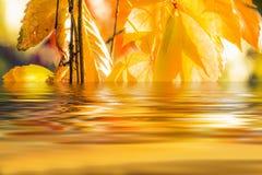 Jesień liści odbijać Obraz Stock