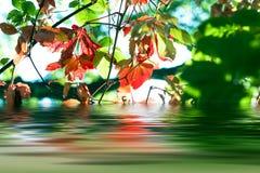 Jesień liści odbijać Zdjęcia Stock