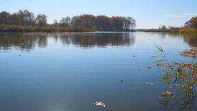 Jesień liści pławik na wodzie Jezioro lub rzeka z zaciszności wodą w jesień sezonie zbiory