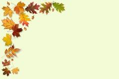 Jesień liści rama fotografia stock