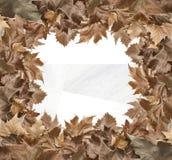 Jesień liści rama Zdjęcia Royalty Free