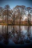 Jesień liści Spadać Obrazy Royalty Free