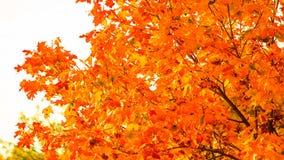 Jesień liści spadku drzew natury tło Obrazy Stock