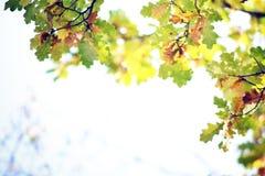 Jesień liści tło Zdjęcie Stock