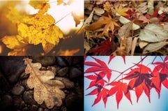Jesień liści tło Fotografia Royalty Free