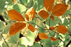 Jesień liści tło Obrazy Stock