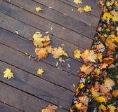 Jesień liści tło Zdjęcia Royalty Free