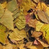 Jesień liści tło Zdjęcia Stock