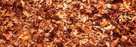 Jesień liści tło w jesień parku Plenerowy jesieni pojęcie Fotografia Royalty Free