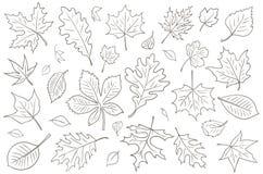Jesień liści wektoru rysunek Fotografia Stock