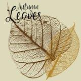 Jesień liści wektory Fotografia Royalty Free
