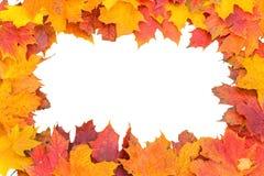 Jesień liści winieta Obrazy Stock