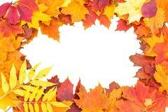 Jesień liści winieta Fotografia Stock