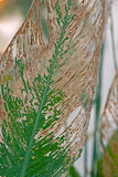 Jesień liści wodny arrowroot Zdjęcia Stock
