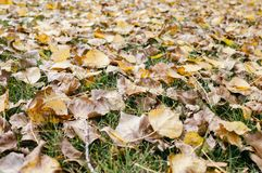 Jesień liścia ściółka w ogródzie lub parku, spada plenerowy natury tło z kolorowymi spadać liśćmi obraz royalty free