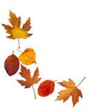 Jesień liścia granica Obrazy Royalty Free